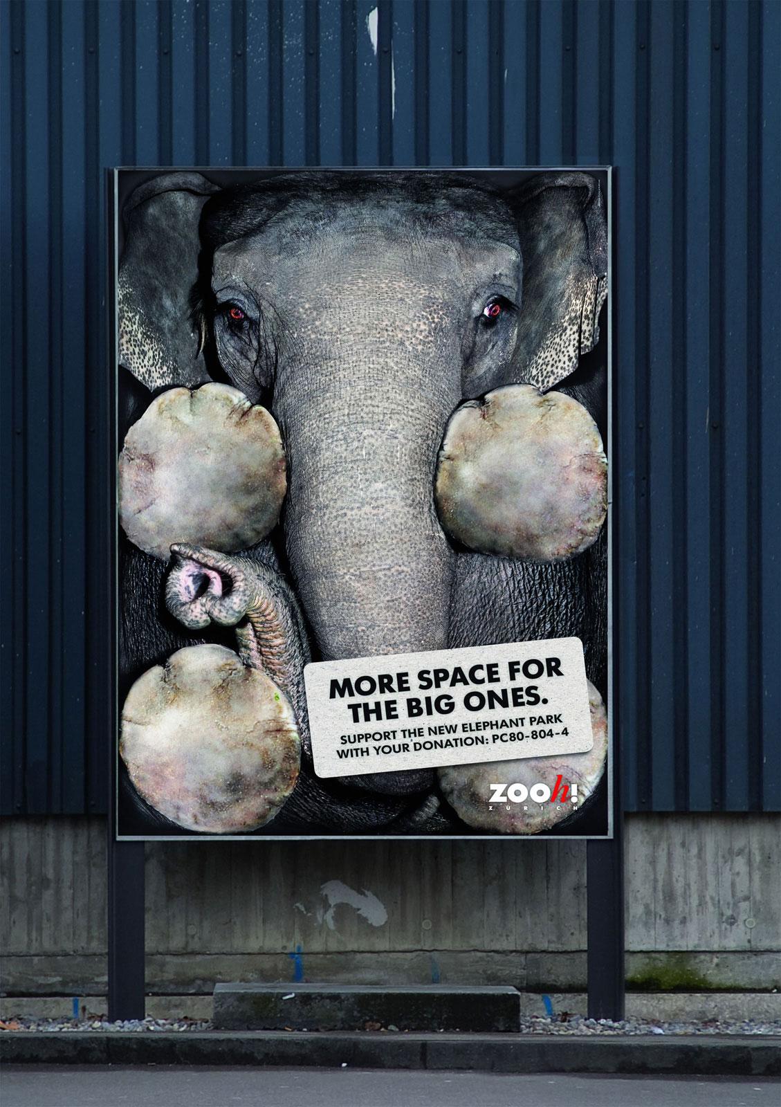 zoo-zurich-elephant