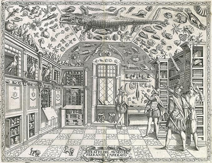 43-cabinet-curiosités-1599